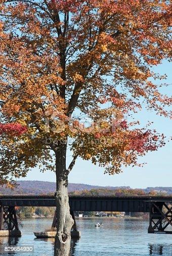 Big tree in the fall by railroad bridge.