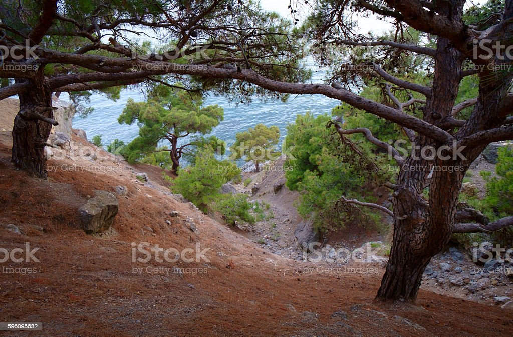 Baum und Meer Lizenzfreies stock-foto