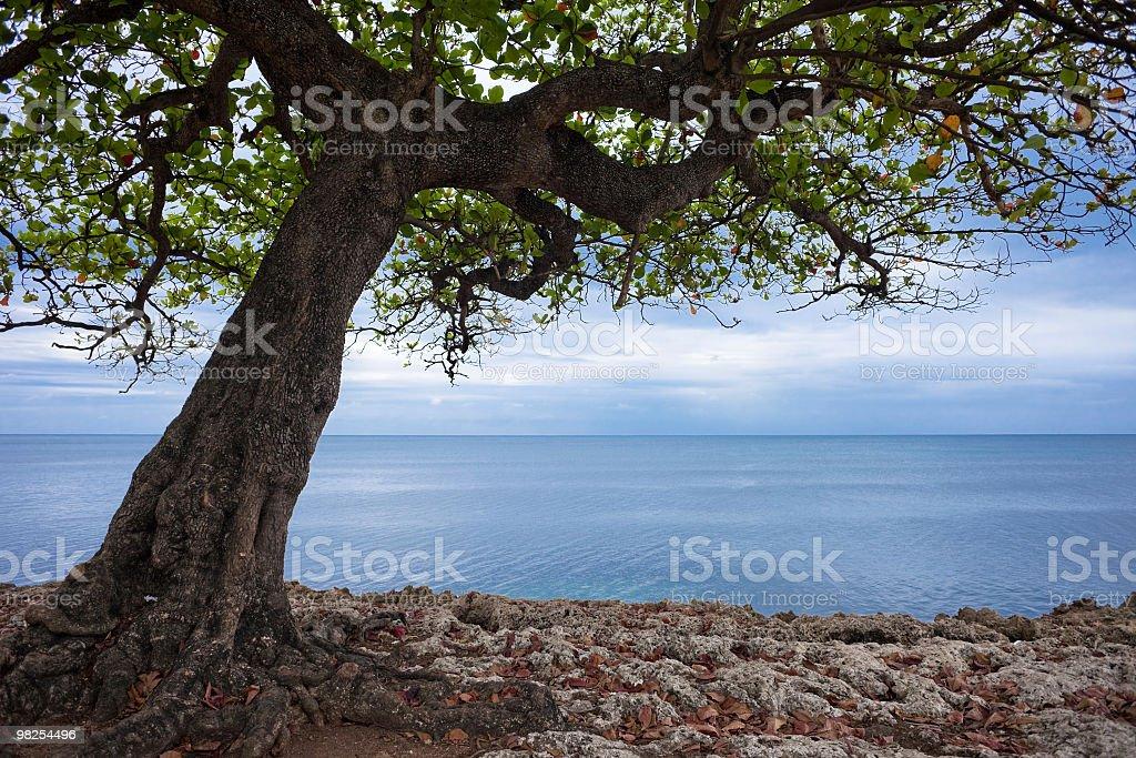 Tree and sea royalty-free stock photo