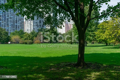A tree with shade at an open park with grass in Edgewater Chicago with residential skyscrapers in the background