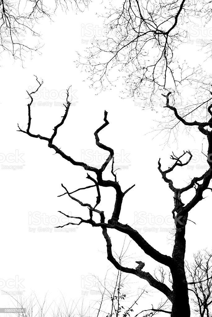 Arbre et le ciel  photo libre de droits
