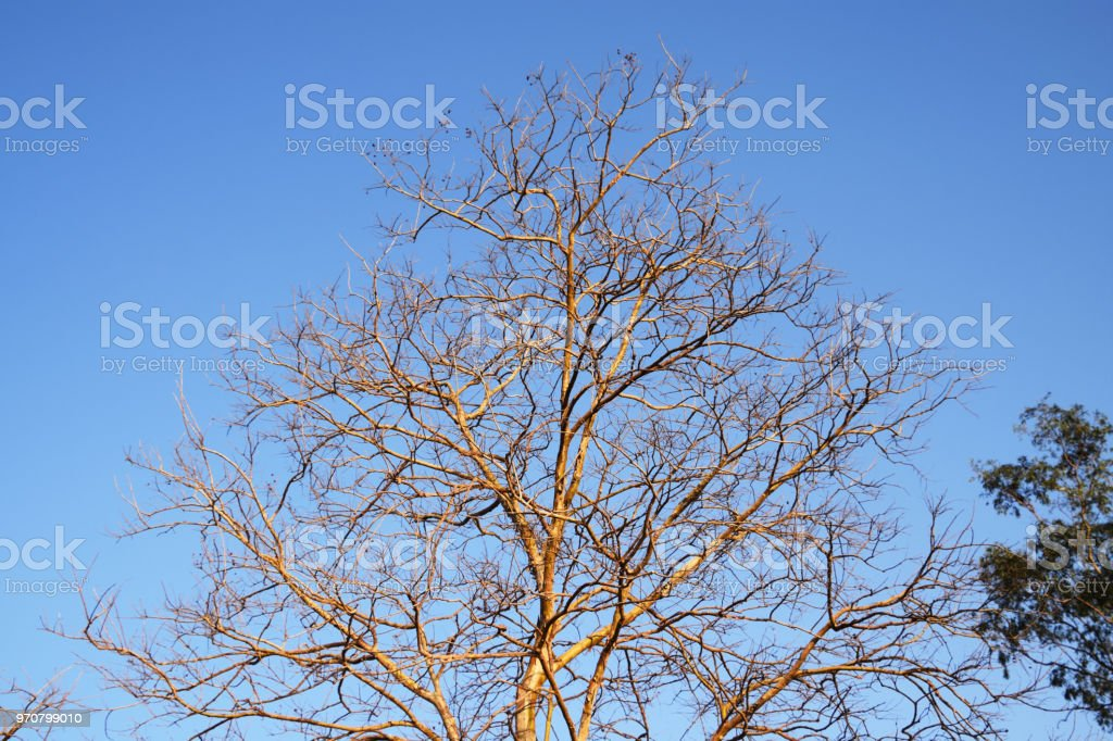 Tree and soil stock photo