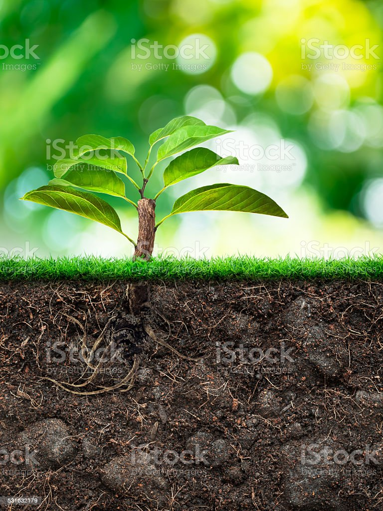 Tree and Soil with Grass stock photo