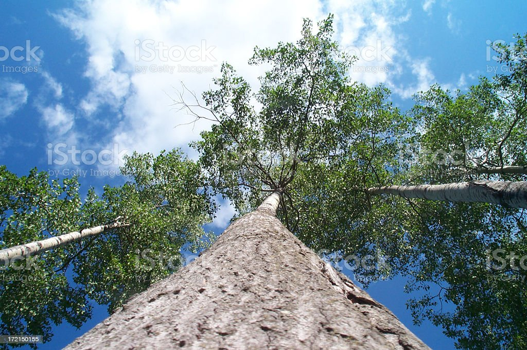 Tree and the sky royalty-free stock photo