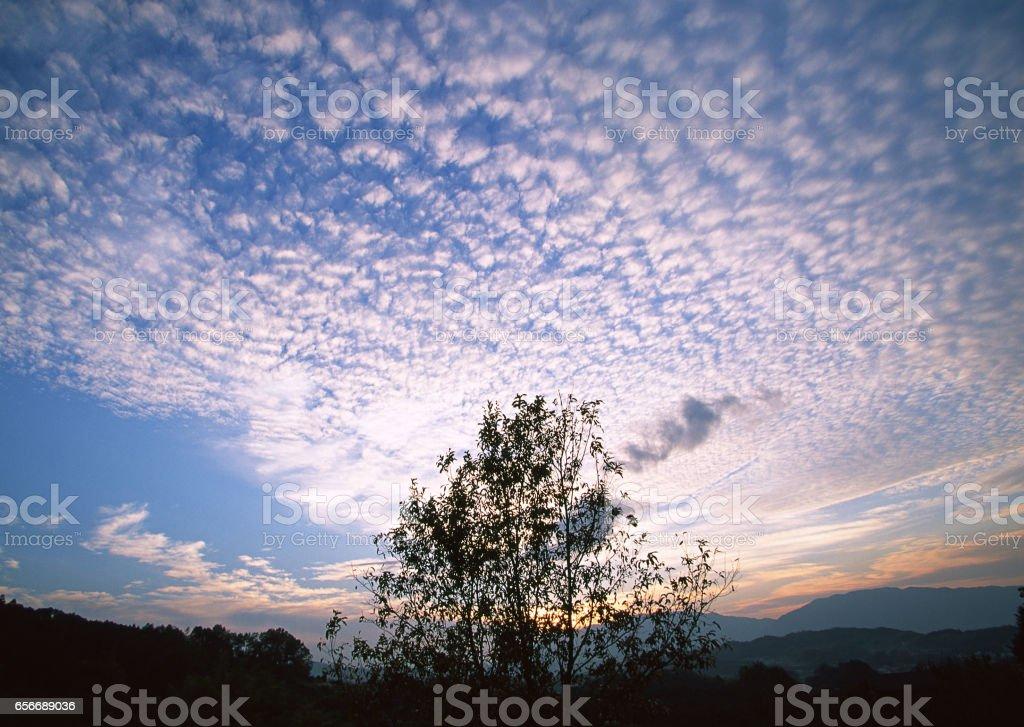 Tree and the sky stock photo