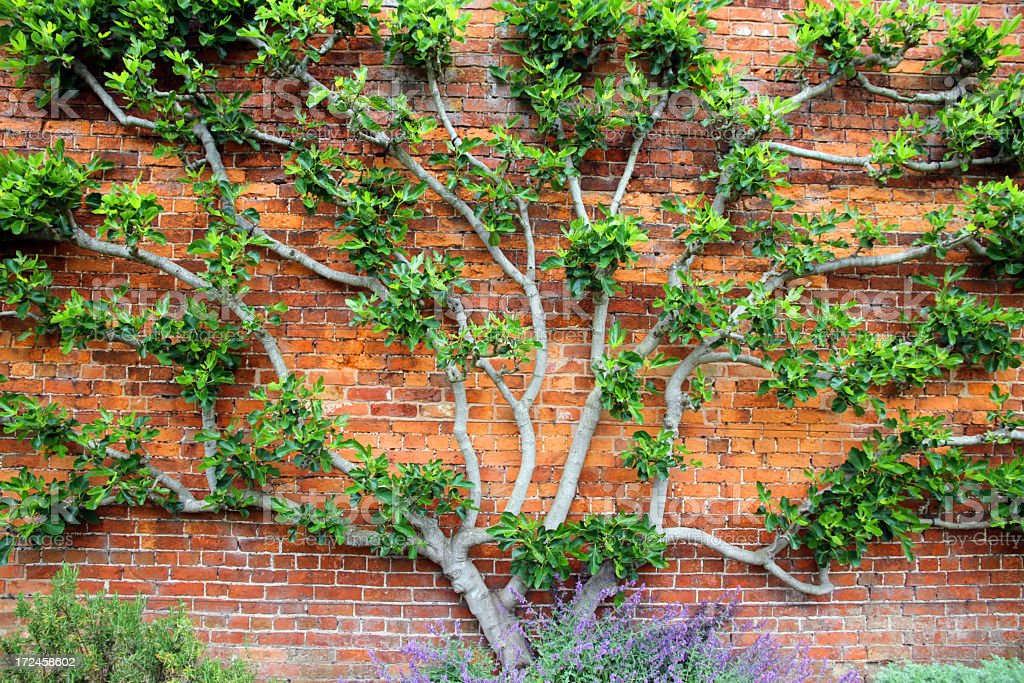 Tree and Wall stock photo