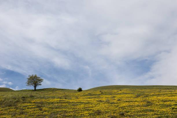 Tree and yellow flowers stock photo