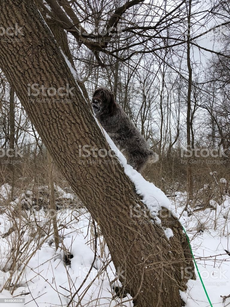 Tree and yoga dog stock photo