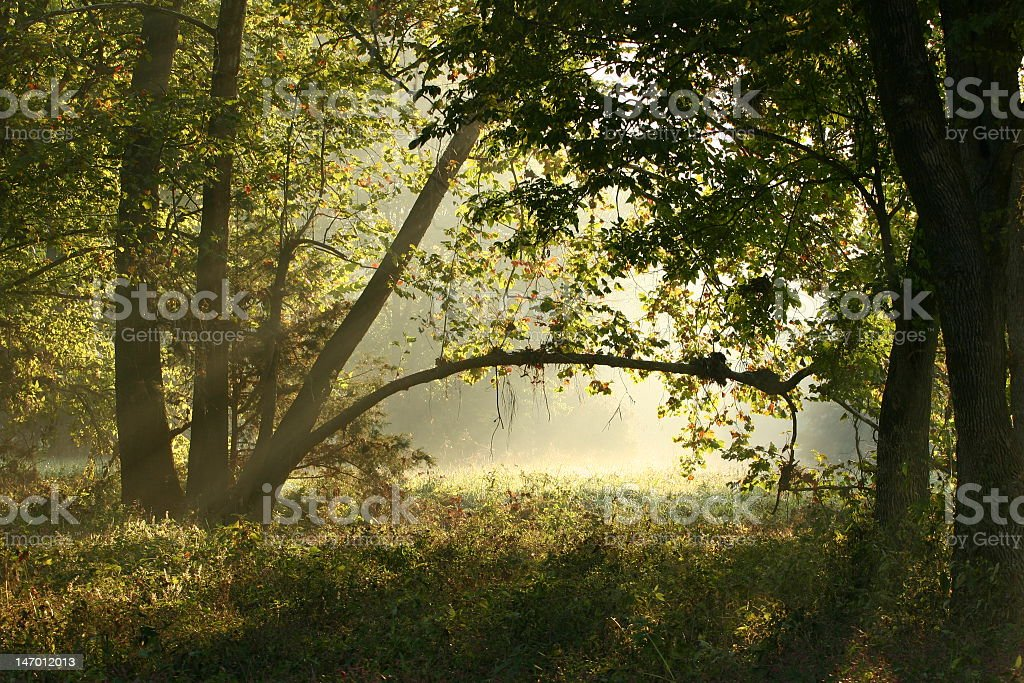 A tree archway with sun shining through stock photo