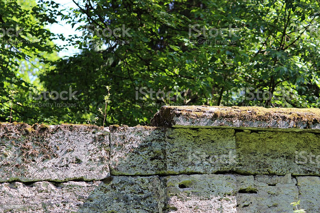 tree are growing in the wall near the park Sylvia stock photo