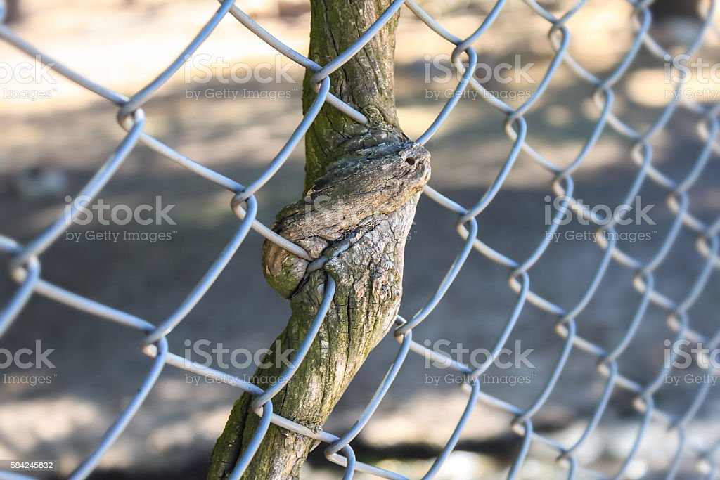 Inseparable Royalty Free Stock Photo