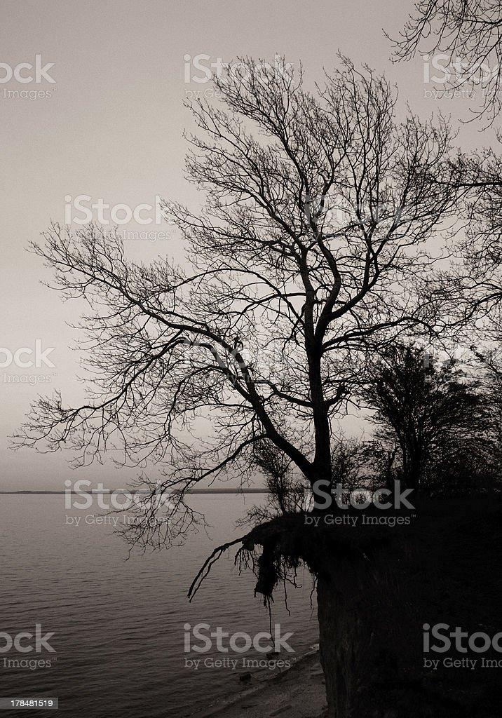 Baum in der Umgebung - Lizenzfrei Anhöhe Stock-Foto