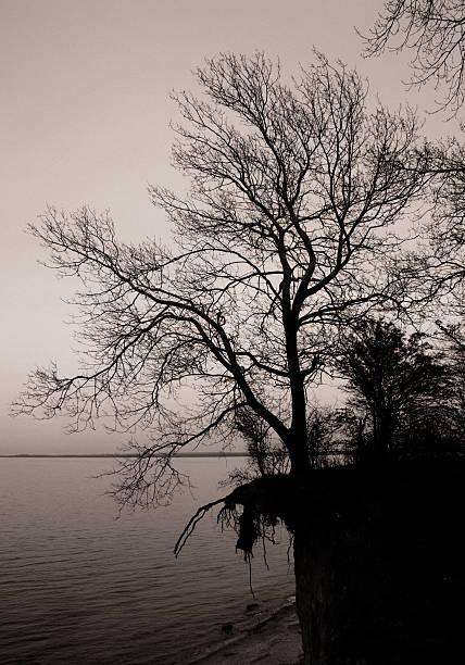 Baum in der Umgebung – Foto