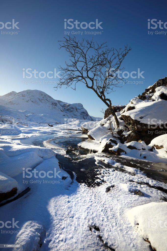 Tree at Glencoe, Scottish Highlands, Scotland, UK stock photo
