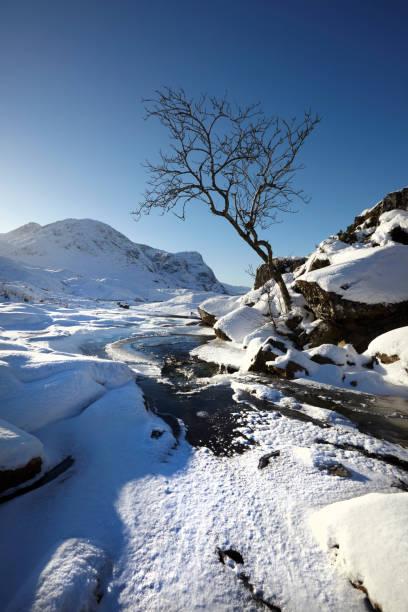 Tree at Glencoe, Scottish Highlands, Scotland, UK stock photo