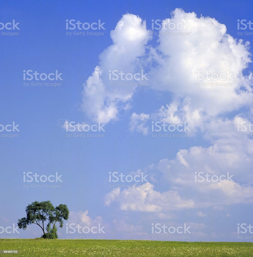 tree at horizon royalty-free stock photo