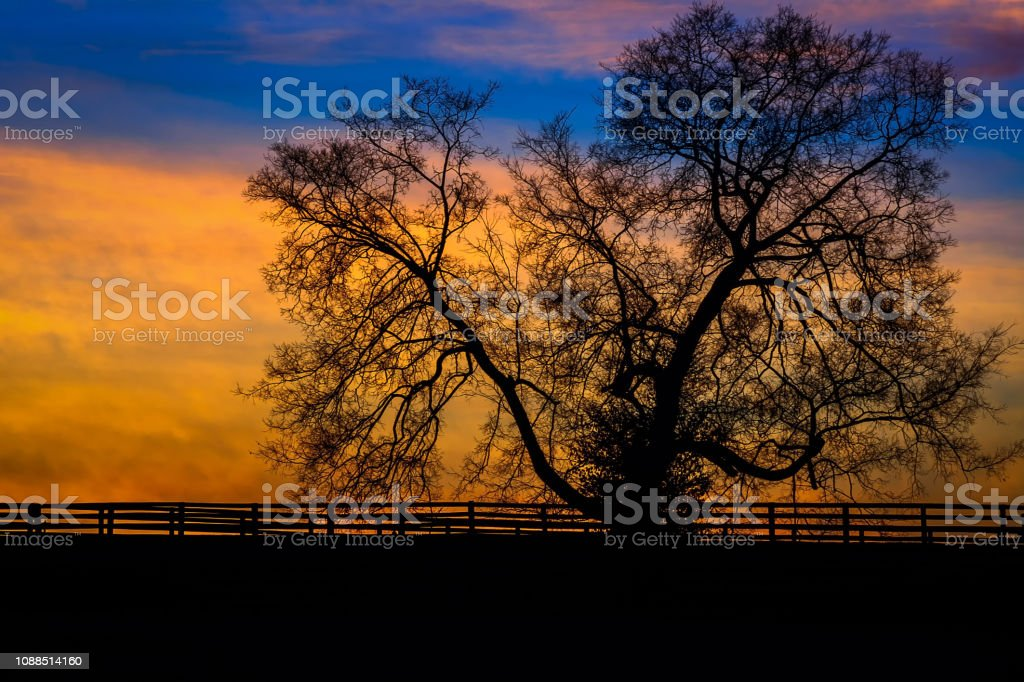 Tree at Ironwood 1 stock photo