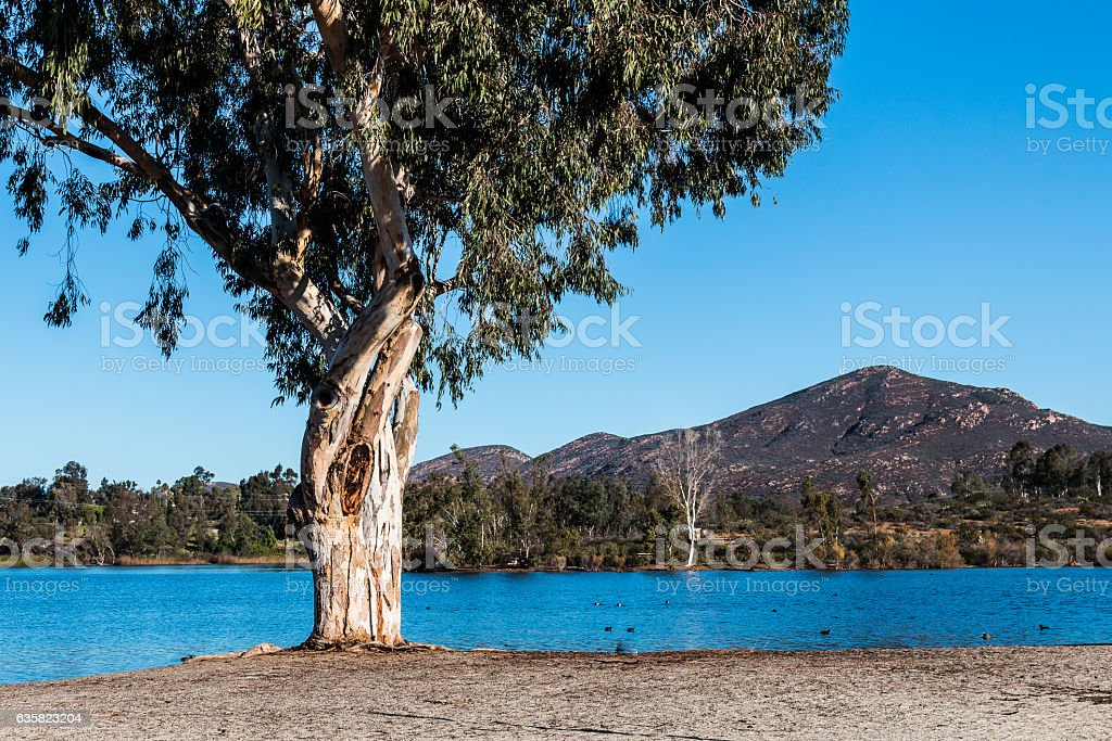 Tree at Lake Murray with Cowles Mountain in San Diego stock photo
