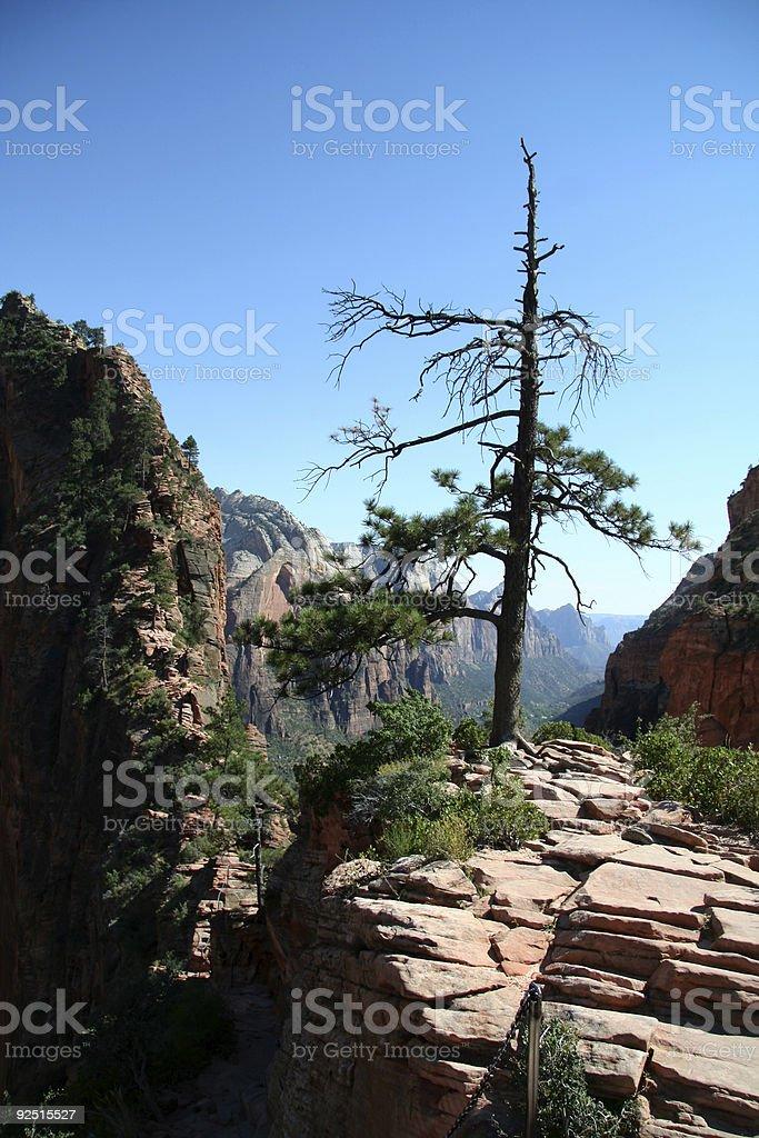 Tree at Mountain Top royalty-free stock photo