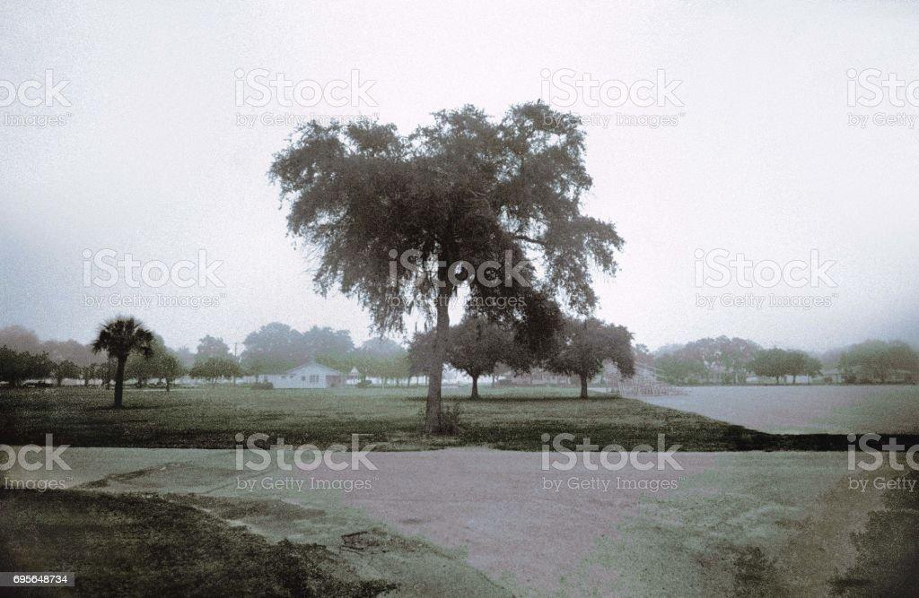 Tree at Paris Island stock photo