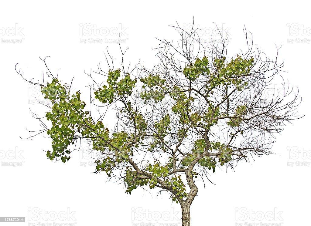 Tree at spring royalty-free stock photo