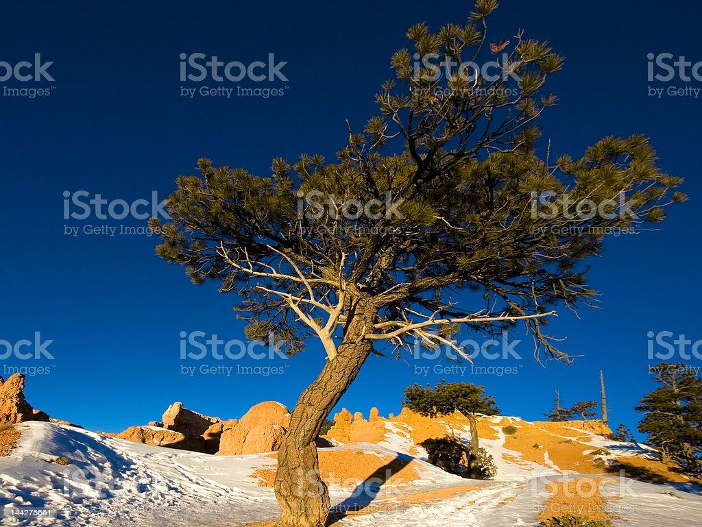 Tree at sunrise royalty-free stock photo