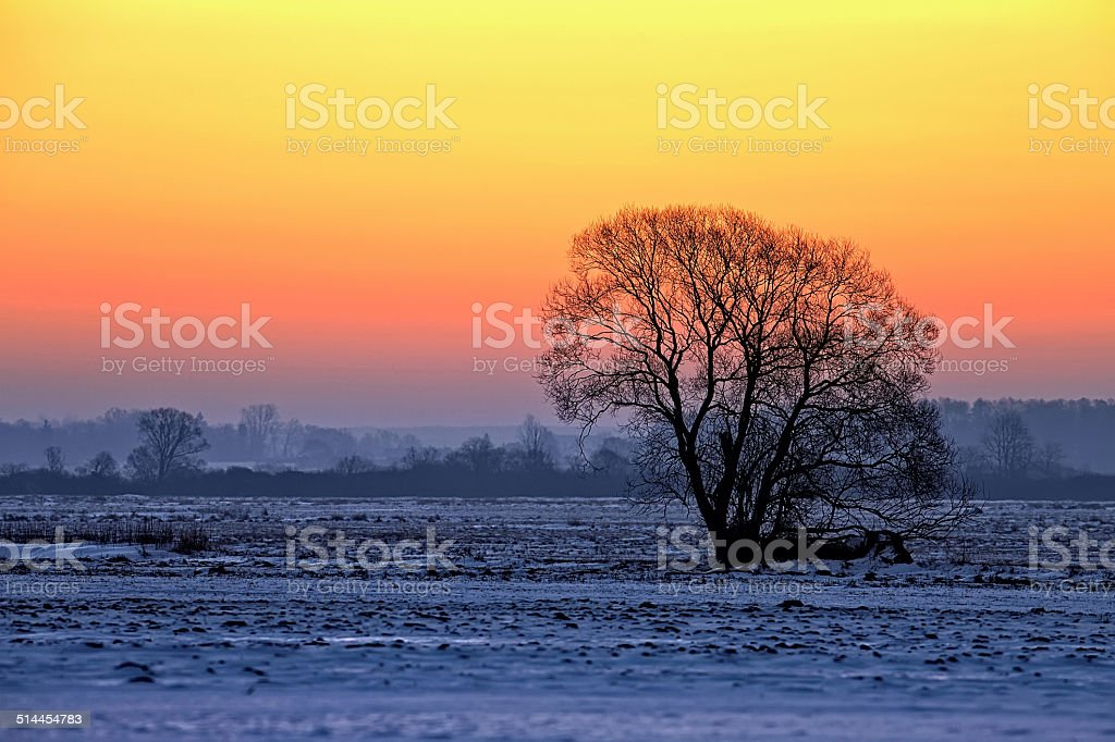 Tree at sunset in winter stock photo