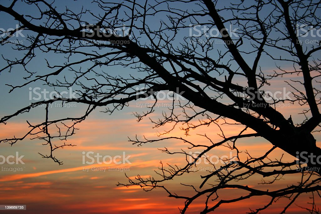 Tree at sunset royalty-free stock photo