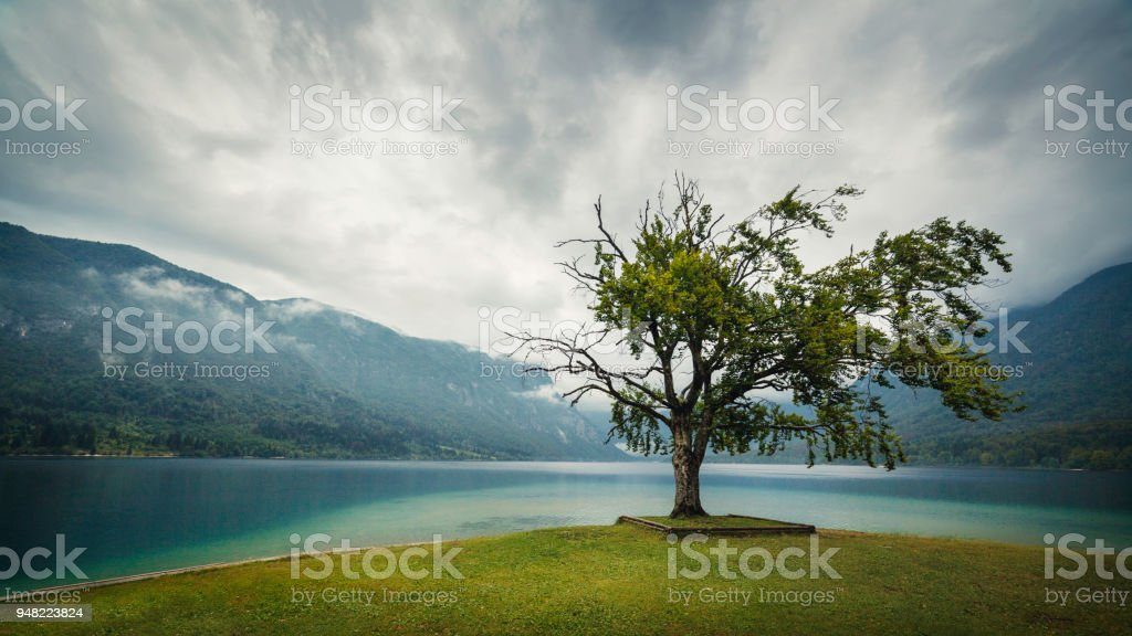 Tree at the Bohinj Lake, Slovenian Alps stock photo