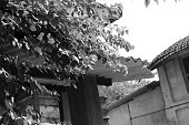 istock Tree at the home roof  (black And White) 510239044