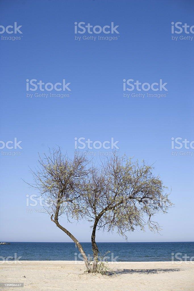 tree at the ocean beach royalty-free stock photo
