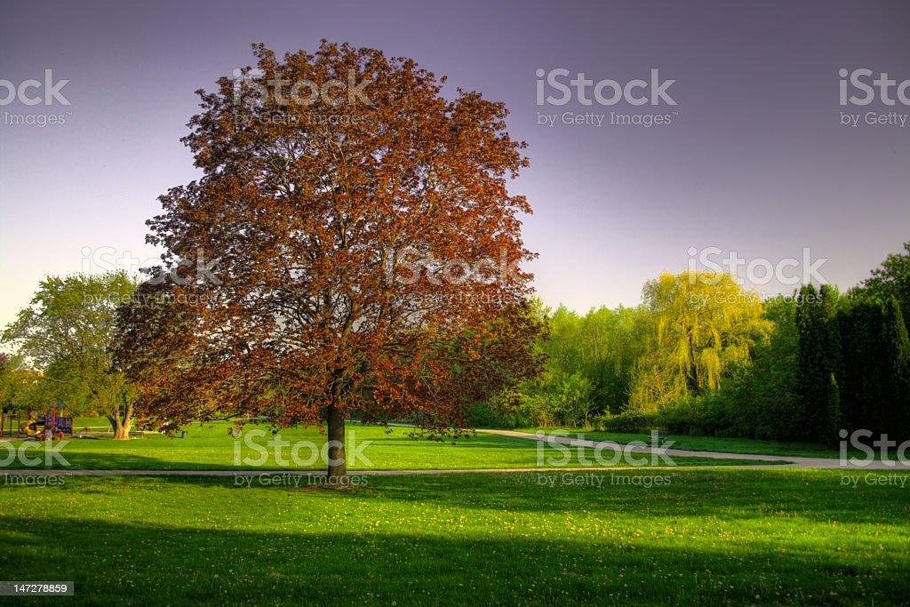 Tree at the park royalty-free stock photo