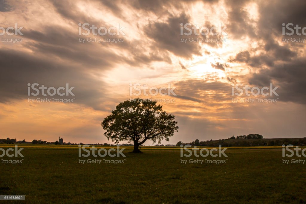 Tree at the sunset stock photo