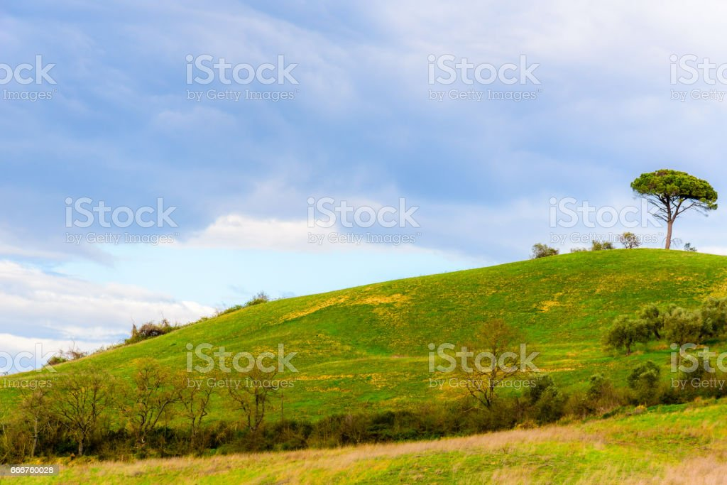 Tree at the top of a hill against blue sky foto stock royalty-free