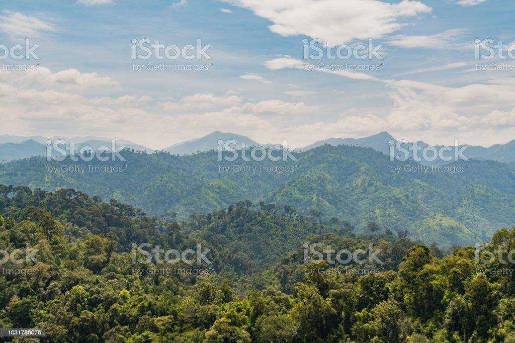 Baum an der Spitze des Berges. – Foto