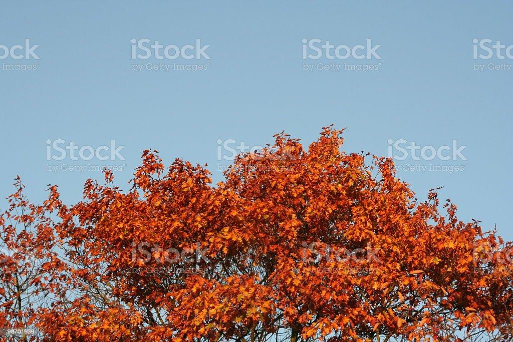 Tree Autumn Fire royalty-free stock photo
