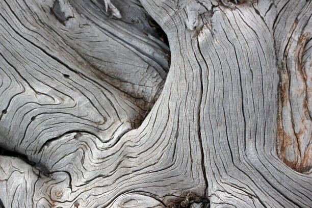 tree background - natural pattern stock photos and pictures
