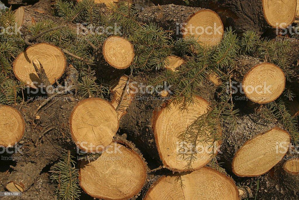 Tree Background royalty-free stock photo