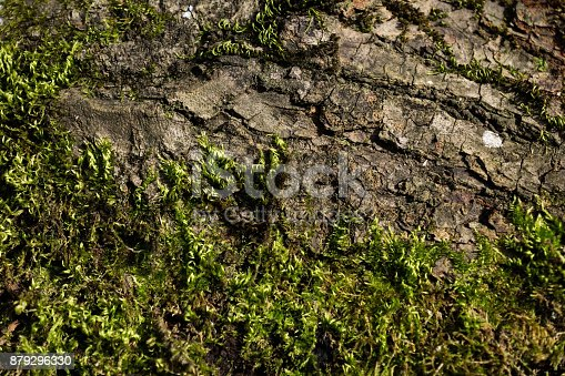 istock Tree balk with and moss in sun, Austria 879296330