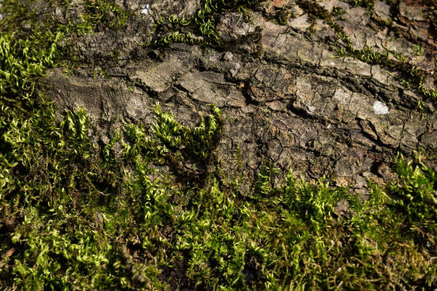 Tree balk with and moss in sun, Austria stock photo