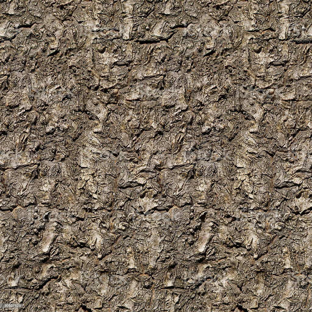 Tree Bark  10, seamless royalty-free stock photo