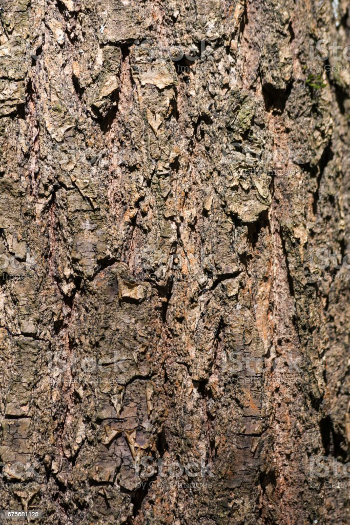 Tree bark as background royalty-free stock photo
