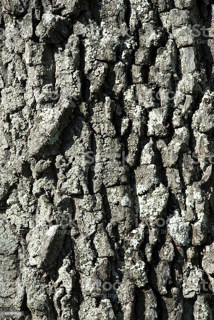 Tree Bark Background royalty-free stock photo
