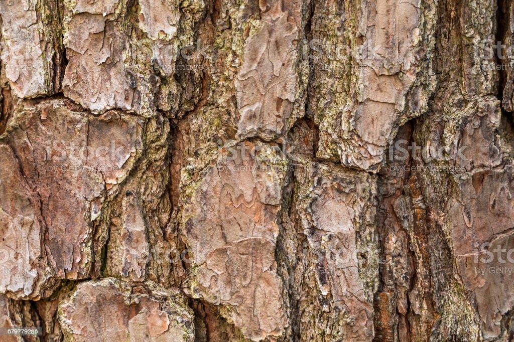 Tree Bark Close Up stock photo