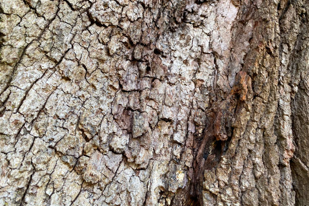 tree bark close-up natural sun light shadows stock photo