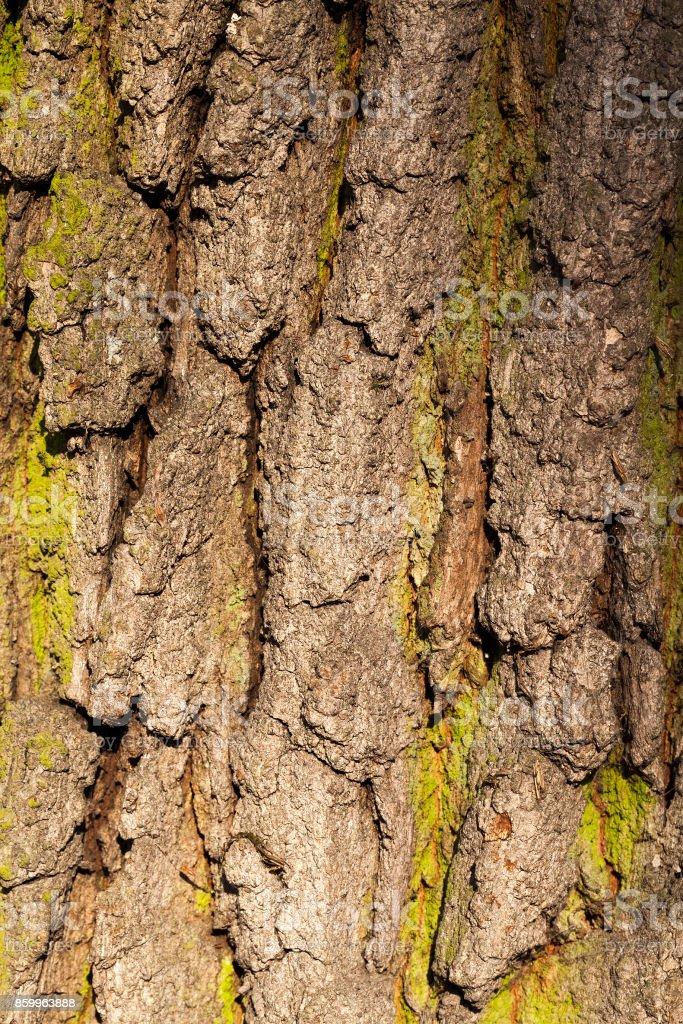 Tree bark, close-up stock photo