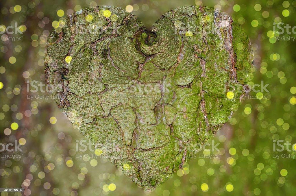 Tree bark closeup with clear heart shape stock photo