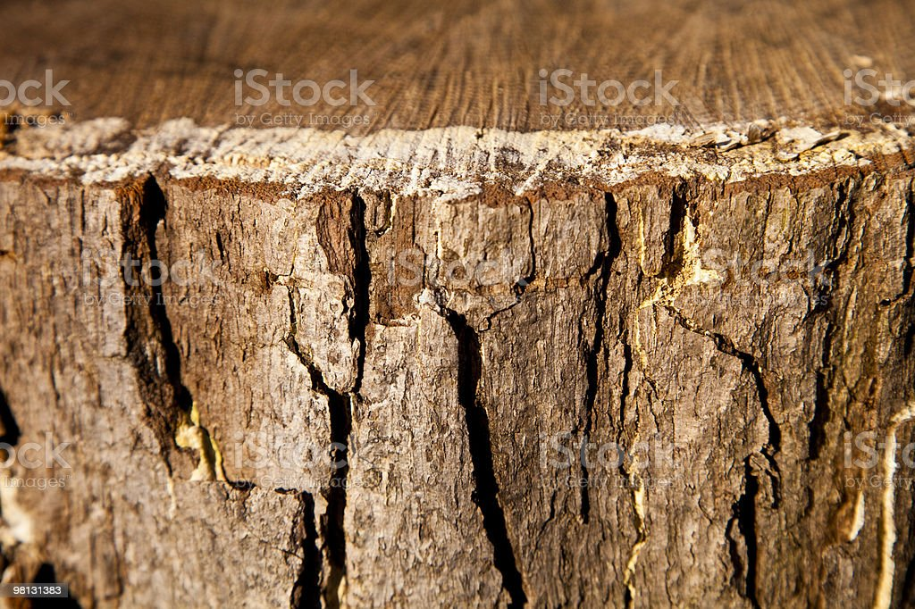 Tree Bark Coseup royalty-free stock photo