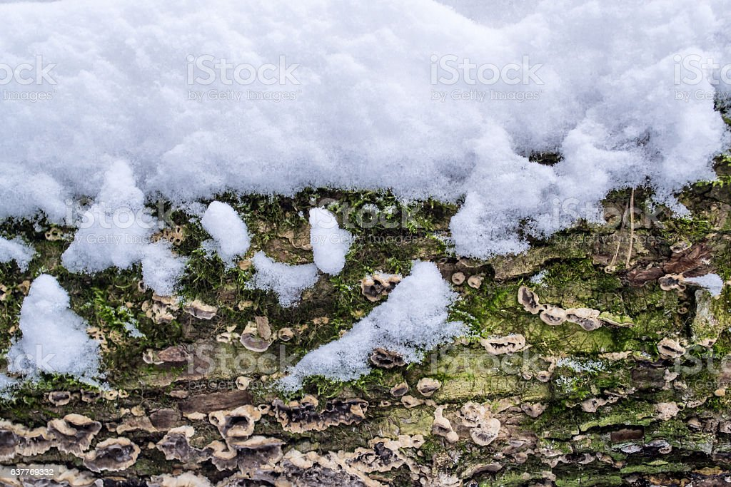 Tree bark cover with mold and moss   textured background stock photo