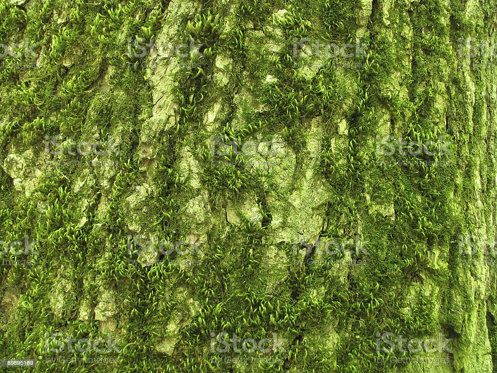 tree bark covered by a moss royalty-free stock photo